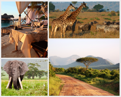 Africa-Collage.png